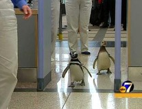 Penguinsgoingthroughsecurity